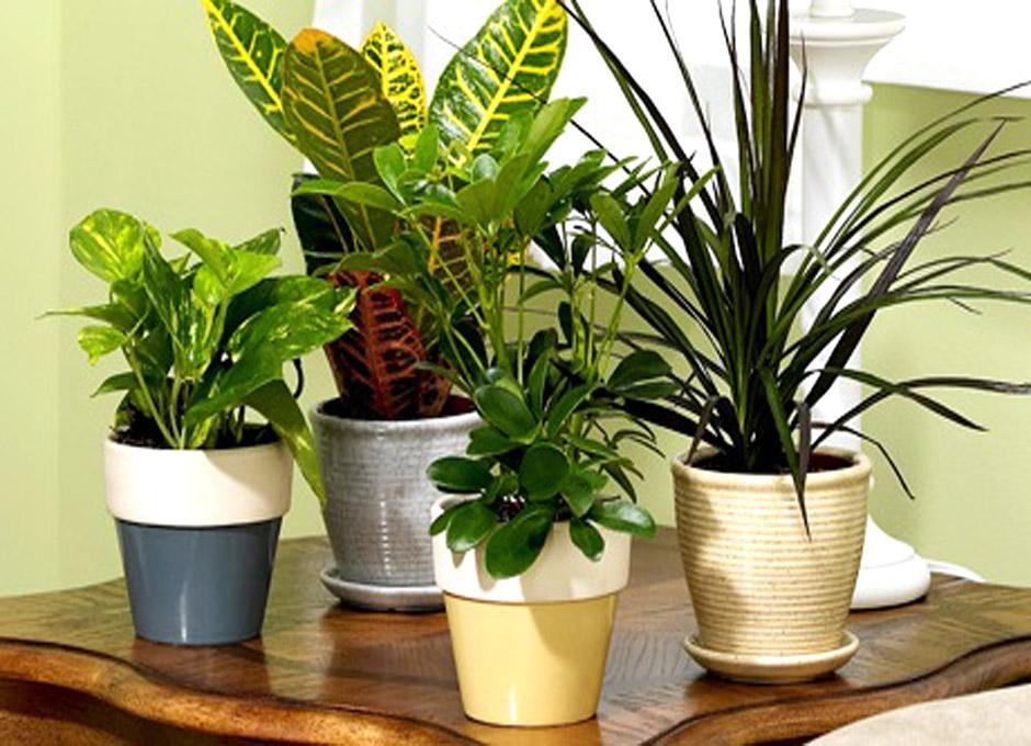 Purifique el aire de su casa u oficina con plantas dsalud for Plantas decorativas para oficina