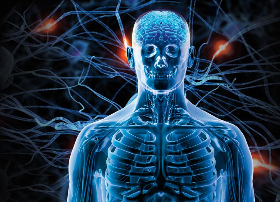 Actuando sobre una parte del cuerpo se puede tratar todo el ...