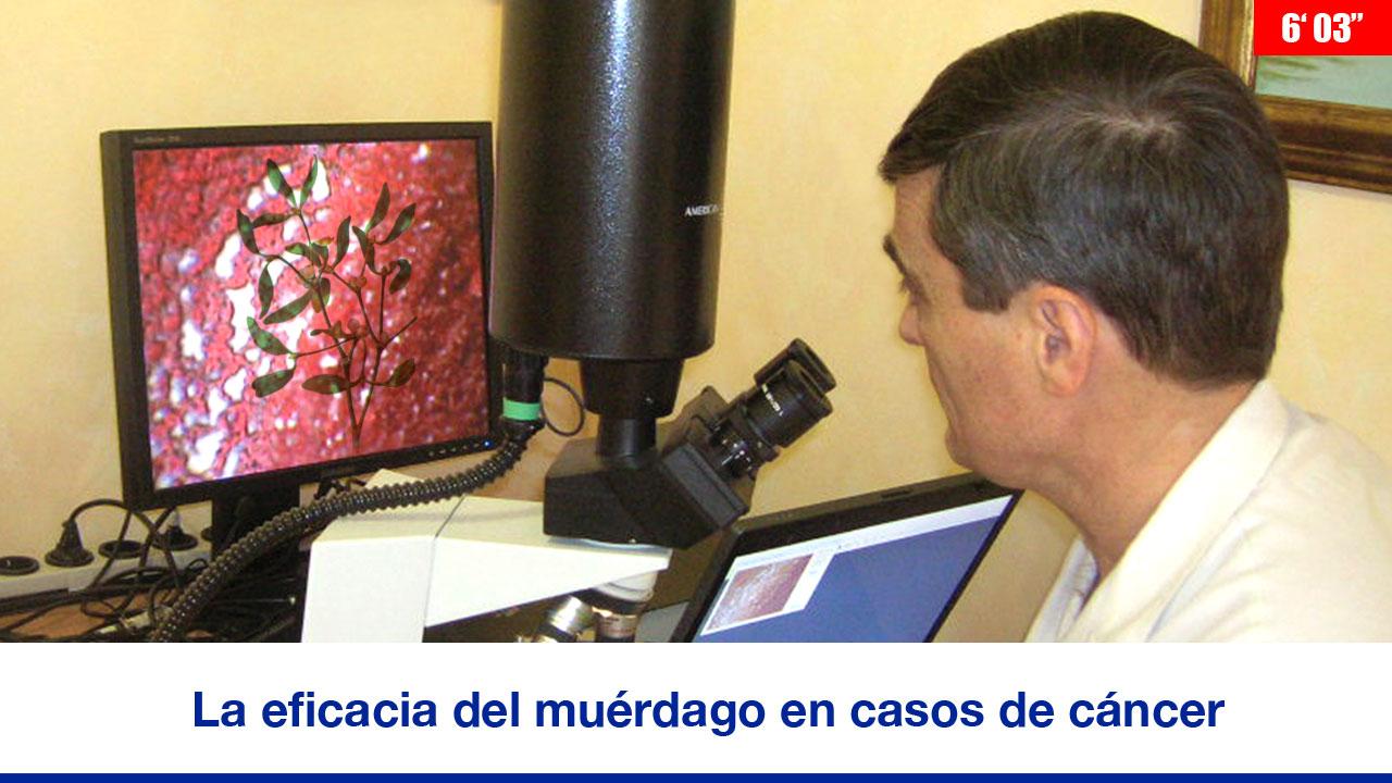 La eficacia del muérdago en casos de cáncer