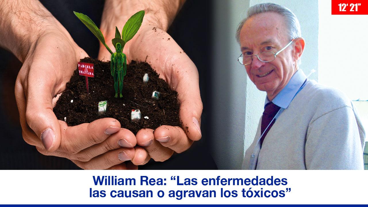 """William Rea: """"Las enfermedades las causan o agravan los tóxicos"""""""